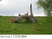 Пень. Стоковое фото, фотограф владимир самохин / Фотобанк Лори