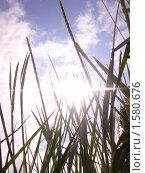 Растения. Стоковое фото, фотограф sfsfs / Фотобанк Лори