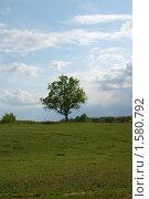 Летний день. Стоковое фото, фотограф владимир самохин / Фотобанк Лори