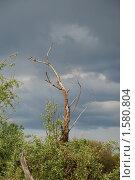 Тянемся к небу. Стоковое фото, фотограф владимир самохин / Фотобанк Лори
