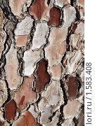 Купить «Текстура коры пицундской сосны», фото № 1583408, снято 9 января 2010 г. (c) Анна Мартынова / Фотобанк Лори