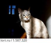 Кошка. Стоковое фото, фотограф Алексей Дектерев / Фотобанк Лори