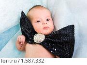 Портрет маленького мальчика с блестящим бантом. Стоковое фото, фотограф Игорь Губарев / Фотобанк Лори