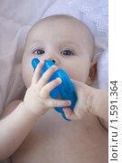 Купить «Лицо младенца с синей игрушкой в руках», фото № 1591364, снято 25 августа 2019 г. (c) Вдовенко Галина / Фотобанк Лори