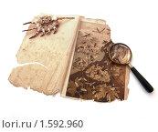 Старая книга, лупа и ракушка. Стоковое фото, фотограф Вера Власенко / Фотобанк Лори