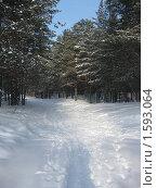 Купить «Лес», фото № 1593064, снято 20 февраля 2010 г. (c) Марина Чиркова / Фотобанк Лори