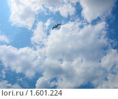 Чайка летит в небе с облаками. Стоковое фото, фотограф Назвин Алексей / Фотобанк Лори
