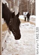 Лошадь. Стоковое фото, фотограф Ольга Нигаматулина / Фотобанк Лори