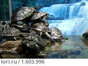Купить «Красноухие черепахи», фото № 1603996, снято 31 марта 2010 г. (c) Вера Тропынина / Фотобанк Лори