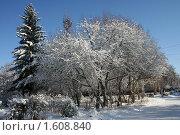 Деревья зимой. Стоковое фото, фотограф Станислав Горбачев / Фотобанк Лори