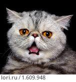 Звёздный кот. Стоковое фото, фотограф Дмитрий Лемешко / Фотобанк Лори