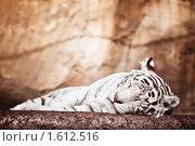 Купить «Бенгальский тигр», фото № 1612516, снято 20 марта 2010 г. (c) Евгений Захаров / Фотобанк Лори