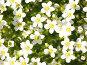 Цветочки, эксклюзивное фото № 1614000, снято 26 мая 2007 г. (c) Михаил Карташов / Фотобанк Лори