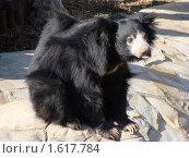 Медведь. Стоковое фото, фотограф sfsfs / Фотобанк Лори
