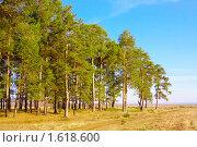Купить «Опушка соснового бора», фото № 1618600, снято 9 апреля 2010 г. (c) Alexandr Shevchenko / Фотобанк Лори