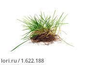Побеги молодой травы на белом фоне. Стоковое фото, фотограф Александр Букша / Фотобанк Лори
