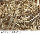 Купить «Фон из стружек и сухой травы», фото № 1633412, снято 4 апреля 2010 г. (c) Емельянова Светлана Александровна / Фотобанк Лори