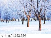 Купить «Зимний пейзаж в кленовом парке», фото № 1652756, снято 16 декабря 2018 г. (c) Евгений Захаров / Фотобанк Лори