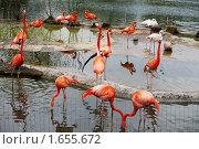 Купить «Розовые фламинго в Московском зоопарке», фото № 1655672, снято 24 апреля 2010 г. (c) Наталья Волкова / Фотобанк Лори