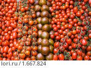 Купить «Томаты разных сортов на витрине», фото № 1667824, снято 20 апреля 2010 г. (c) Юлия Сайганова / Фотобанк Лори