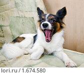 Купить «Собака с открытой пастью», фото № 1674580, снято 3 мая 2010 г. (c) Сергей Лаврентьев / Фотобанк Лори