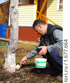 Купить «Весенняя побелка деревьев», фото № 1677664, снято 10 апреля 2010 г. (c) Бассейн Максим Юрьевич / Фотобанк Лори