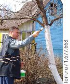 Купить «Весенняя побелка деревьев», фото № 1677668, снято 10 апреля 2010 г. (c) Бассейн Максим Юрьевич / Фотобанк Лори