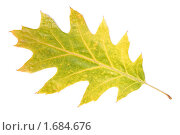 Осенний лист. Стоковое фото, фотограф Александр Тесевич / Фотобанк Лори