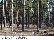 Купить «Сосновый бор», фото № 1686996, снято 25 апреля 2010 г. (c) Виктор Сагайдашин / Фотобанк Лори
