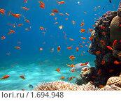 Золотые рыбки. Стоковое фото, фотограф Межерицкая Юлия Сергеевна / Фотобанк Лори
