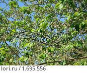 Дерево. Стоковое фото, фотограф Сергей Криволапов / Фотобанк Лори