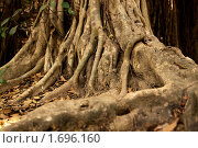 Корни заповедного дерева. Стоковое фото, фотограф Дмитрий Бороздин / Фотобанк Лори