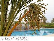 Цвет пальмы. Стоковое фото, фотограф Межерицкая Юлия Сергеевна / Фотобанк Лори