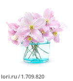Купить «Весенний букет», фото № 1709820, снято 17 мая 2010 г. (c) Tamara Kulikova / Фотобанк Лори