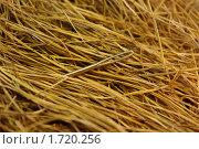 Иголка в стоге сена. Стоковое фото, фотограф Наталья Камайкина / Фотобанк Лори
