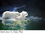 Купить «Белый медвежонок играет с большим белым медведем-папой в воде», фото № 1722752, снято 20 мая 2010 г. (c) Fro / Фотобанк Лори