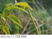 Купить «Роса на рассвете», фото № 1728944, снято 16 мая 2010 г. (c) Владимир Соловьев / Фотобанк Лори