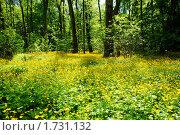 Купить «Лес в золоте», фото № 1731132, снято 21 мая 2010 г. (c) Качанов Владимир / Фотобанк Лори