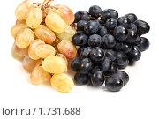 Купить «Черный и белый виноград  на тарелке», фото № 1731688, снято 15 июля 2009 г. (c) ElenArt / Фотобанк Лори