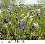Купить «Весенние первоцветы», фото № 1744484, снято 27 мая 2010 г. (c) Ольга Остроухова / Фотобанк Лори
