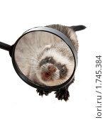 Купить «Рожа страшная зубастая в лупе видна», фото № 1745384, снято 22 апреля 2010 г. (c) Ирина Кожемякина / Фотобанк Лори