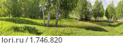 Купить «Летний пейзаж», фото № 1746820, снято 12 декабря 2017 г. (c) Юрий Бельмесов / Фотобанк Лори
