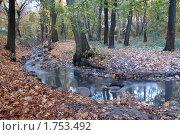 Купить «Парковый ручей», эксклюзивное фото № 1753492, снято 23 октября 2008 г. (c) Svet / Фотобанк Лори