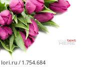 Купить «Розовые тюльпаны в капельках воды», фото № 1754684, снято 26 марта 2010 г. (c) Наталия Кленова / Фотобанк Лори