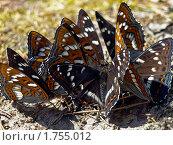 Купить «Скопление бабочек», фото № 1755012, снято 6 июня 2010 г. (c) Самойлова Екатерина / Фотобанк Лори