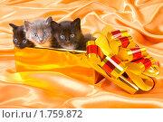 Купить «Три котенка в подарочной коробке», фото № 1759872, снято 10 мая 2010 г. (c) Алексей Многосмыслов / Фотобанк Лори