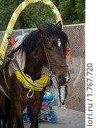 Запряженная лошадь. Стоковое фото, фотограф Олыкайнен Наталья / Фотобанк Лори