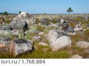 Камни и дерево вдалеке. Стоковое фото, фотограф Вероника Денега / Фотобанк Лори