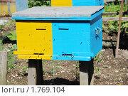Купить «Пасека на дачном участке, разноцветный улей и пчелы в летке», фото № 1769104, снято 13 июня 2010 г. (c) Анна Мартынова / Фотобанк Лори