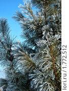Зима. Стоковое фото, фотограф павлычев евгений / Фотобанк Лори